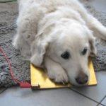 hundbehandling2-300x225